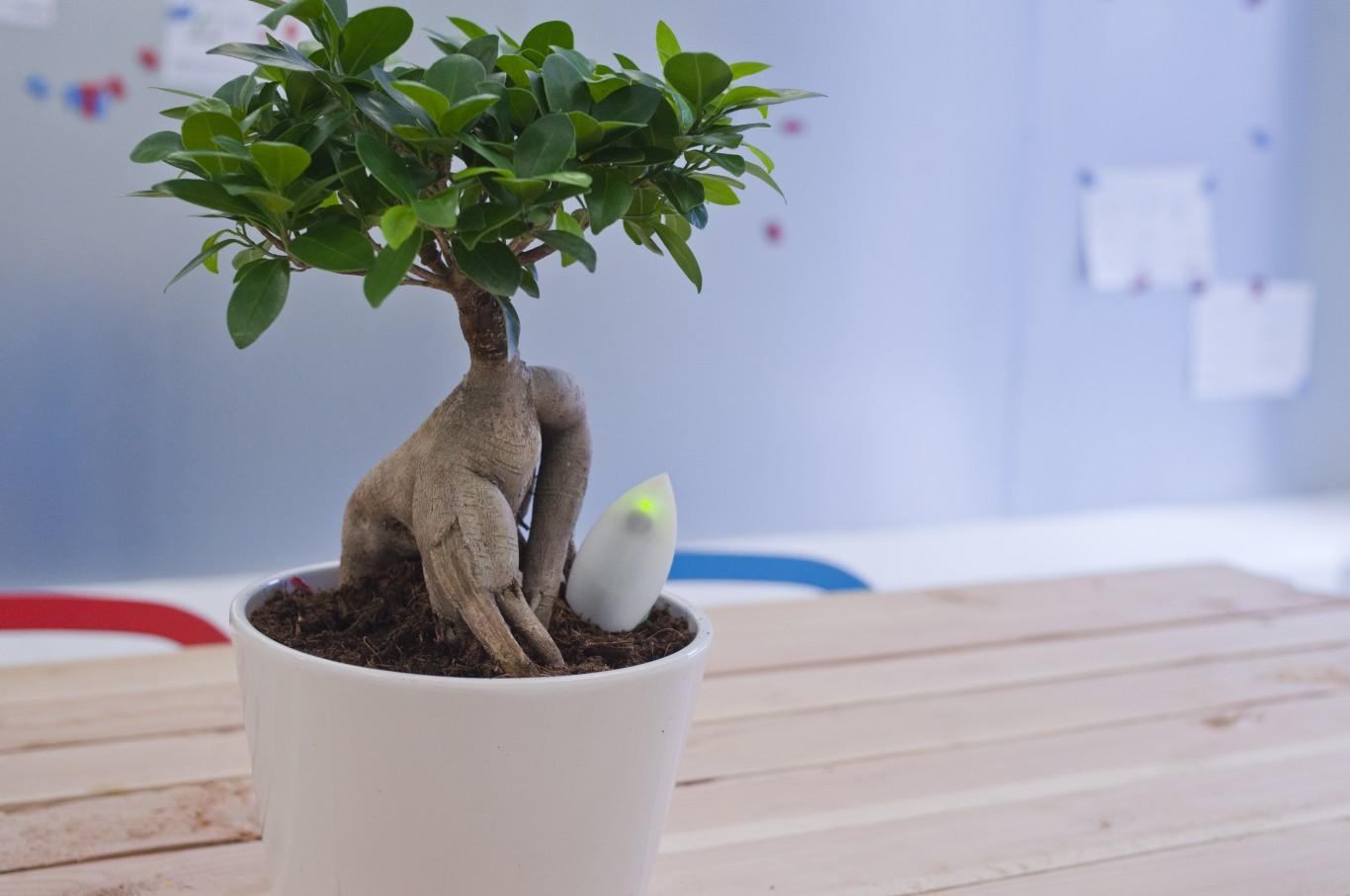 Moistly redt je planten van een droge dood